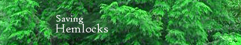Saving Hemlocks