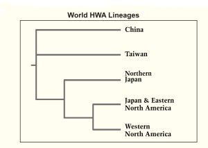 LinEAGES